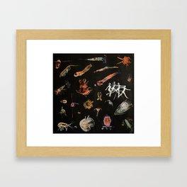 PLANKTON || Framed Art Print