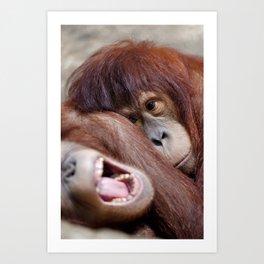 Two young sleepy orangutans Art Print