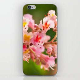 Aesculus red chestnut tree blossoms iPhone Skin