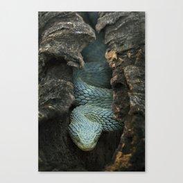 Blue Bush Viper in Hollow Log Canvas Print