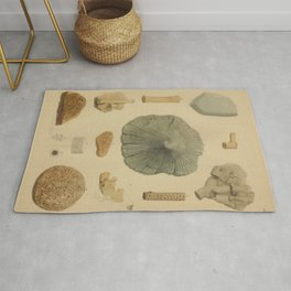 Coral Fossils Rug