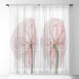 Pink Anthurium Sheer Curtain