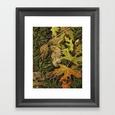 Fallen Autumn Leaves on the Shore of Hall Lake Framed Art Print