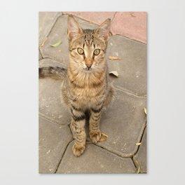 Cute Tabby Street Cat Canvas Print