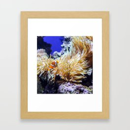 Find a fishy friend Framed Art Print
