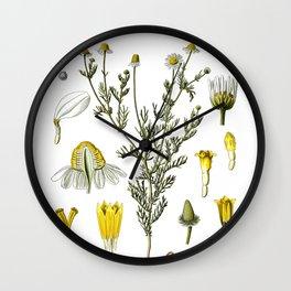 Nature, botanical print, flower poster art of Chamomile Wall Clock