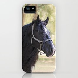 Stunning Gypsy Vanner in Color iPhone Case