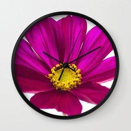 Magenta Cosmos Flower Wall Clock