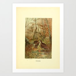 Vintage Print - Animate Creation (1898) - A Group of Buntings Art Print