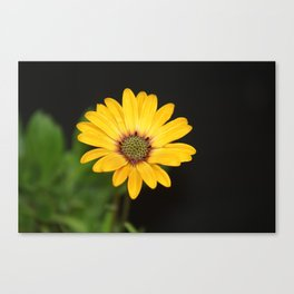 Big Yellow Canvas Print