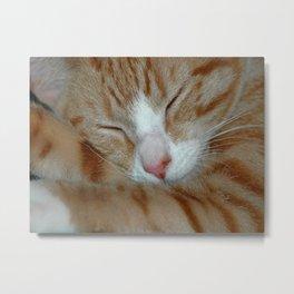 Ginger Kitten Sleeping Metal Print
