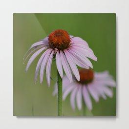 Purple Coneflower Pair - A Butterfly's Best Friend Metal Print