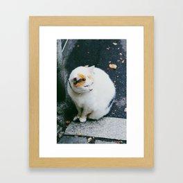 Cat like Snow Framed Art Print