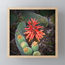 Cactus-Wrapped Flaming Firecraker Flower Framed Mini Art Print