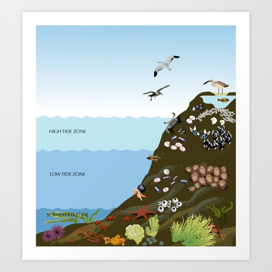 Southern California Tide Pool Explorer's Guide Art Print