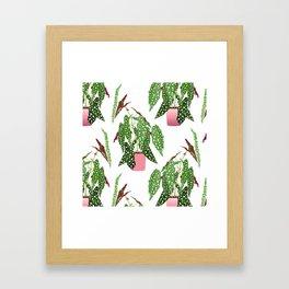 Simple Potted Polka Dot Begonia Plants in White Framed Art Print