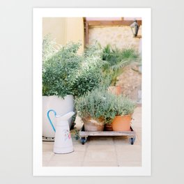 Kitchen garden pots, plants and old can - Botanical photography photo print from Portugal Europe Art Print