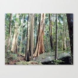 Curtis Falls Rainforest Canvas Print