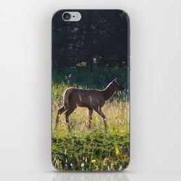 Elk calf in Jasper National Park iPhone Skin