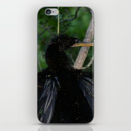 Drying His Wings iPhone Skin