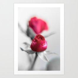 A Redrose on monochrome Background Art Print