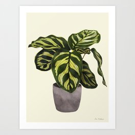 calathea botanical interior plant Art Print