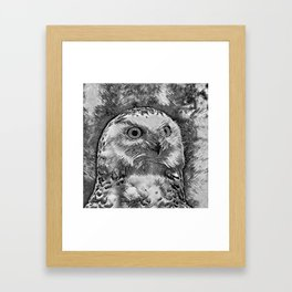 AnimalArtBW_Owl_20170908_by_JAMColorsSpecial Framed Art Print