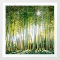Sunlight Filters through Bamboo Forest Fine Art Print by sidecarphoto