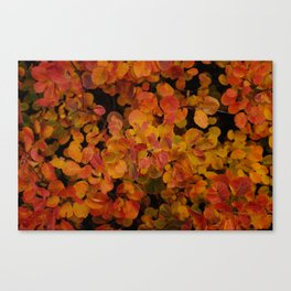 flames of autumn Canvas Print