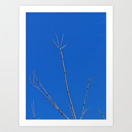 Tree Reaches for the Sky, with a Bony Hand Art Print