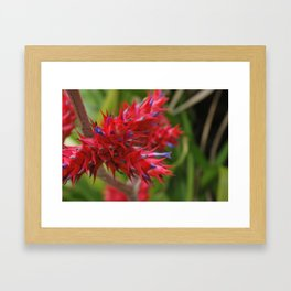 Bromelia Framed Art Print