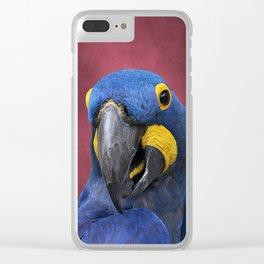 Cheeky Blue Hyacinth Macaw Clear iPhone Case
