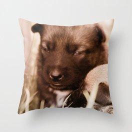 2 weeks old Dutch Shepherd puppies Throw Pillow