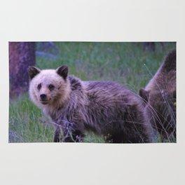 Grizzly bear cub in Jasper National Park   Alberta Rug