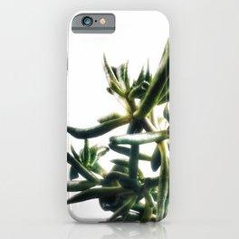 Jade - money plant - succulent in bright light iPhone Case