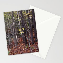 Painted Paradise Stationery Cards