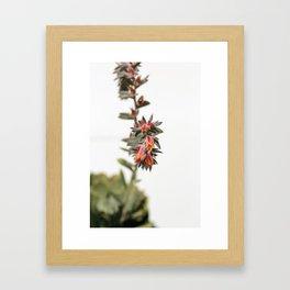 Summer Succulent #1 Framed Art Print