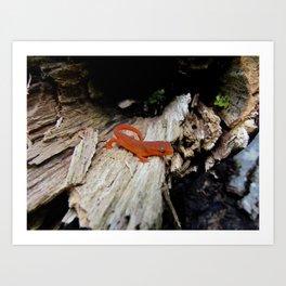 Red Newt Art Print