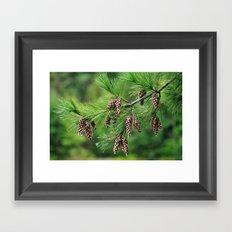 Pine cones Framed Art Print
