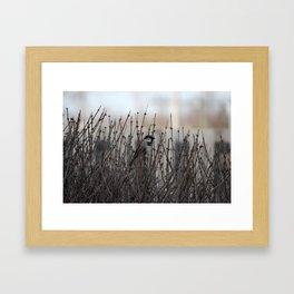 Chickadee in a Bush Framed Art Print