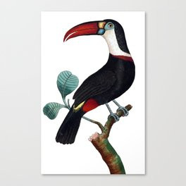 Red-Beaked Toucan Canvas Print