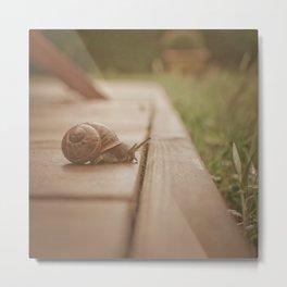 Snail Garden 2 Metal Print