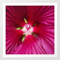 hibiscus Art Prints featuring Hibiscus by Christina Rollo