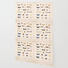 Vintage Hand Drawn Scientific Illustration Insects Butterfly Anatomy Colorful Wings Wallpaper