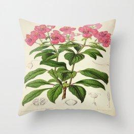 Heterocentron Roseum Vintage Botanical Floral Flower Plant Scientific Throw Pillow
