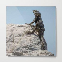 Lizard Sunbathing On A Rock Vector Metal Print