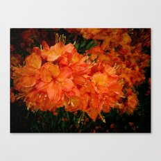 Give me an Orange, Julius Canvas Print