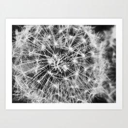 dandelion fireworks Art Print