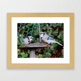 2 Jays Framed Art Print