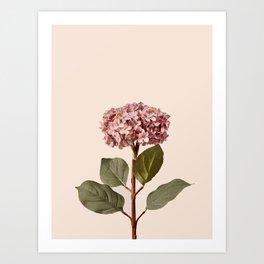 Flowers near me 12 Art Print